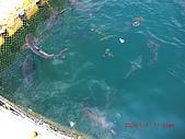 2009澎湖風光:CIMG4120.jpg