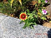 2009澎湖風光:CIMG4141.jpg