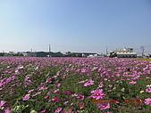 假日去私房景點看花海囉~:CIMG3146.JPG