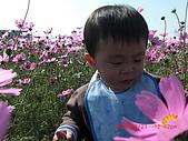 假日去私房景點看花海囉~:CIMG3142.JPG