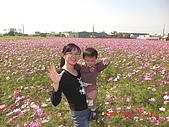 假日去私房景點看花海囉~:CIMG3149.JPG