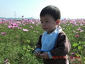 假日去私房景點看花海囉~:CIMG3141.JPG