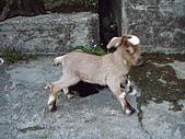 我的狗狗跟小豬跟小羊跟小狗:P4218942.JPG