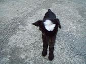 我的狗狗跟小豬跟小羊跟小狗:P4218936.JPG