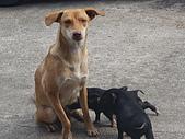 我的狗狗跟小豬跟小羊跟小狗:P3257574.JPG