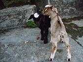 我的狗狗跟小豬跟小羊跟小狗:P4218961.JPG