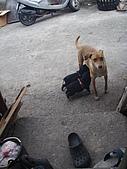 我的狗狗跟小豬跟小羊跟小狗:P4037710.JPG