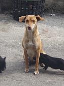 我的狗狗跟小豬跟小羊跟小狗:P3257575.JPG