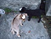 我的狗狗跟小豬跟小羊跟小狗:P4218967.JPG