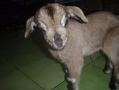 我的狗狗跟小豬跟小羊跟小狗:P3267577.JPG