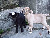 我的狗狗跟小豬跟小羊跟小狗:P4218997.JPG