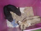 我的狗狗跟小豬跟小羊跟小狗:P3267581.JPG
