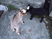我的狗狗跟小豬跟小羊跟小狗:P4218969.JPG