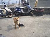 我的狗狗跟小豬跟小羊跟小狗:P3257573.JPG