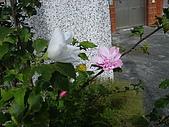 跟植物有關:IMG_0303.JPG