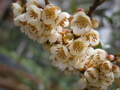 跟植物有關(5):2014-03-28 018.jpg