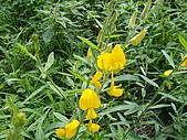 跟植物有關:太陽麻 006.jpg