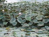 大波池,客家文物館:2013-08-26 021.jpg