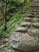 櫻木花道:2013-03-30 013.jpg