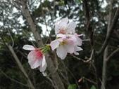 櫻木花道:2013-03-30 006.jpg