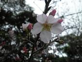 櫻木花道:2013-03-30 007.jpg