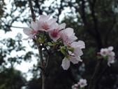 櫻木花道:2013-03-30 008.jpg