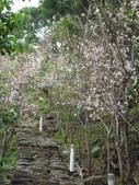櫻木花道:2013-03-30 010.jpg