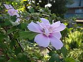 跟植物有關:IMG_0308.JPG