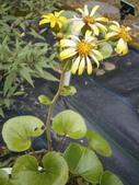 跟植物有關(5):2014-01-21 024.jpg