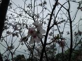 櫻木花道:2013-03-30 014.jpg