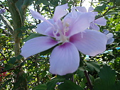 跟植物有關:IMG_0307.JPG
