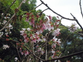 櫻木花道:2013-03-30 015.jpg