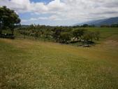 鹿野,初鹿牧場,原生藥用植物園:2013-08-26 243.jpg