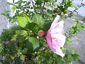 跟植物有關:IMG_0306.JPG
