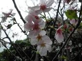 櫻木花道:2013-03-30 016.jpg
