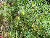 跟植物有關:IMG_0312.JPG