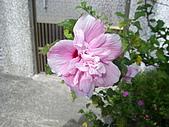 跟植物有關:IMG_0304.JPG
