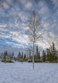 2015-北極酷寒-阿拉斯加探險之旅:IMG_9563_副本.jpg