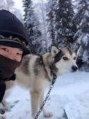 2015-北極酷寒-阿拉斯加探險之旅:IMG_2908.jpg