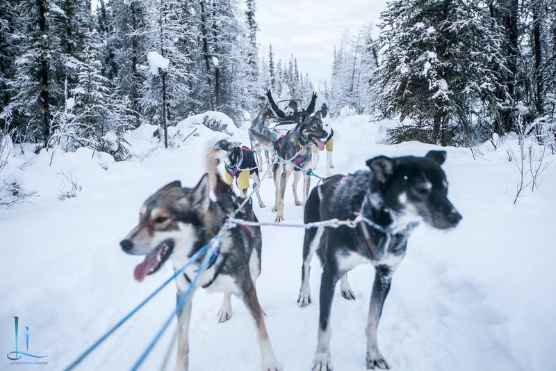 2015-北極酷寒-阿拉斯加探險之旅:IMG_9538_副本.jpg