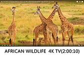 王衡:4.4K VIDEO ULTRAHD AFRICAN WILDLIFE WITH RELAXATION MUSIC FOR 4K OLED TV(2-00-10).jpg