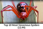王衡:3.Top 10 Most Venomous Spiders(11-44).jpg