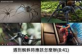 王衡:1.遇到蜘蛛時應該怎麼辦(8-41)-2.jpg