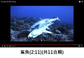 王衡:4.鯊魚(2-11)(共11合輯).jpg