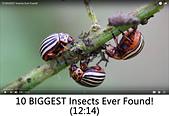王衡:8.10 BIGGEST Insects Ever Found!(12-14).jpg