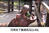 王衡:9.河馬吃下整個西瓜(1-45).jpg