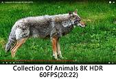 王衡:5.Collection Of Animals 8K HDR 60FPS(20-22).jpg