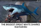 王衡:17.THE BIGGEST GREAT WHITE SHARKS Ever!(10-01).jpg