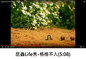 王衡:1.昆蟲Life秀-格格不入(5-08).jpg