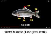 王衡:1.魚的外型與呼吸(13-23)(共11合輯).jpg